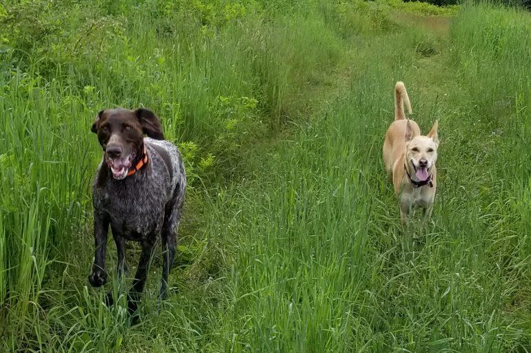 Willie & Ella